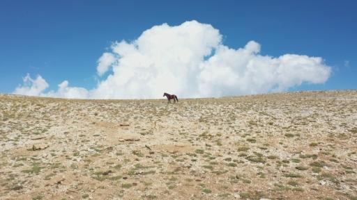 (Özel) Antalya'da 2 bin 500 rakımlı dağdan karın şehre zorlu yolculuğu