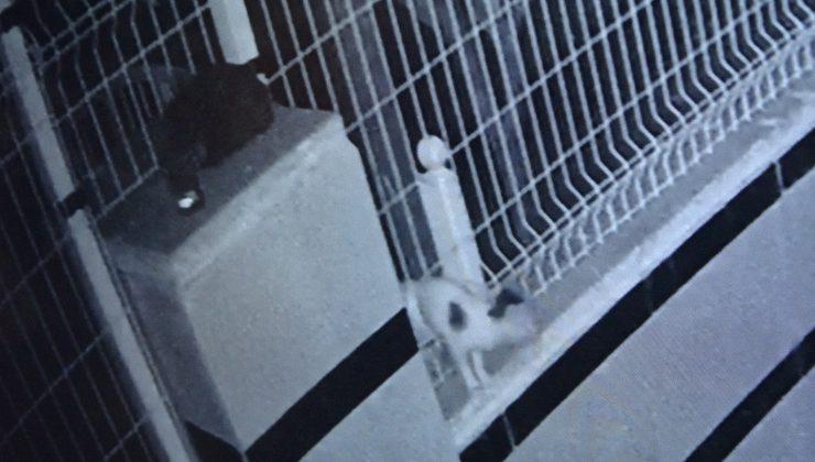 (ÖZEL) Ayağı bahçe teline sıkışan yavru kedi 9 saat boyunca kurtarılmayı bekledi