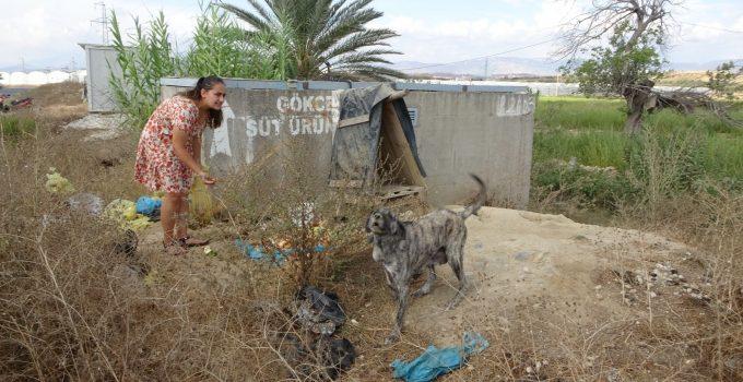 (ÖZEL) Garsonluk yaptıkları otelde çöpe atılan yemeklerle sokak köpeklerini besliyorlar