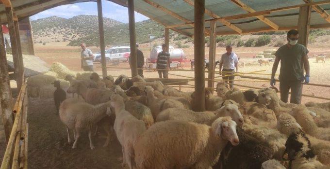 Yangında hayvanları telef olan Manavgatlılara, Korkuteli'nden destek