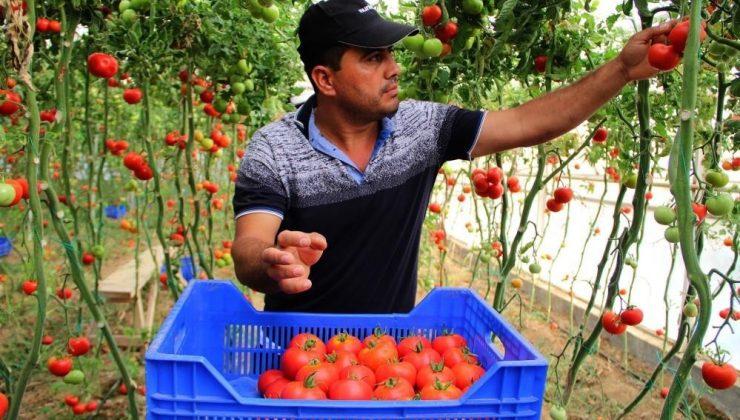 Antalya halinde domatesin fiyat endeksi geçen yılın Eylül ayına göre yüzde 135 arttı