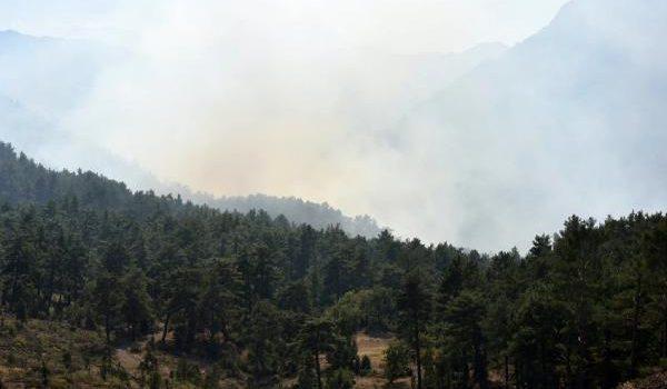 Antalya'da orman yangını çıktı