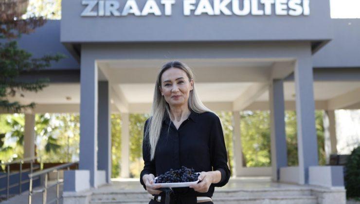 Antalya'nın yüksek rakımlarında üretilen 'süper meyve' Aronya,  pandemi sürecinin gözdesi oldu