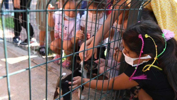 Barınak ziyaretçisi kreş öğrencilerine 'Kedi ve Köpeklerin Koruyucuları' sertifikası