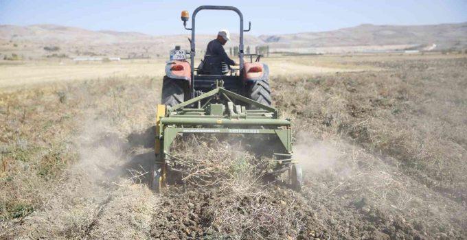 Faydalı böcek yetiştiriciliği için ekilen patatesler hasat ediliyor
