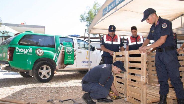 Jandarma, dernekler ile birlikte barınaktaki hayvanlar için kulübe yaptı