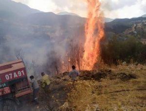Kaş'ta orman yangınında 2 dekar zarar gördü