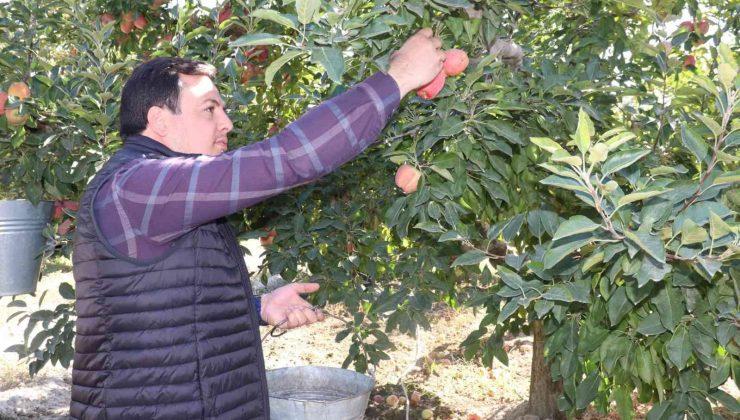 -Korkuteli protokolü elma hasatında