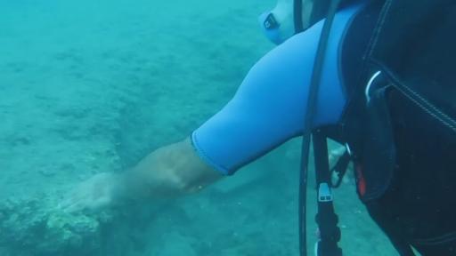 Mahsur kalan naylon balığına su altında Profesör eliyle özgürlük