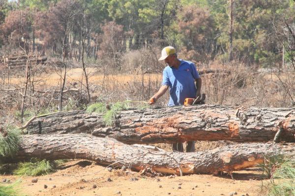 Manavgat'ta yanan ormanlık alanda ağaç kesimi